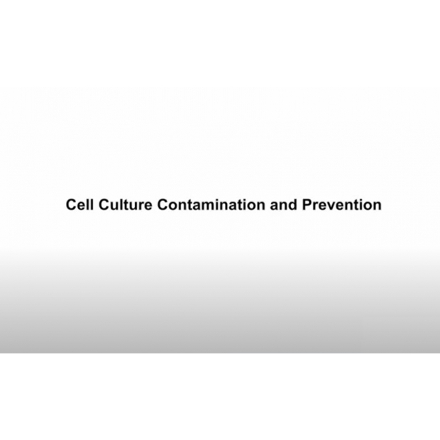 Cell Culture Contamination and Prevention.jpg